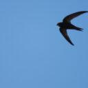 Comienza la campaña otoñal de seguimiento de aves migratorias.