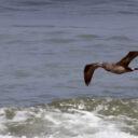 Aves marinas migratorias en Peligro!!!