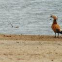Aves migratorias y cambio climático en las islas Canarias