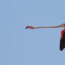 Reunión con la dirección del Parque Nacional Souss Massa